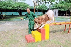 Mẹo huấn luyện chó dễ dàng ngay tại nhà cho người mới